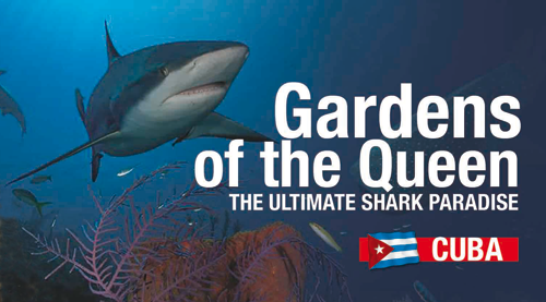 Gardens of the Queen, Cuba's Shark Paradise